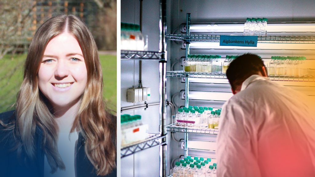 Sofie Allert, VD på Swedish Algae Factory och ett alglaboratorium