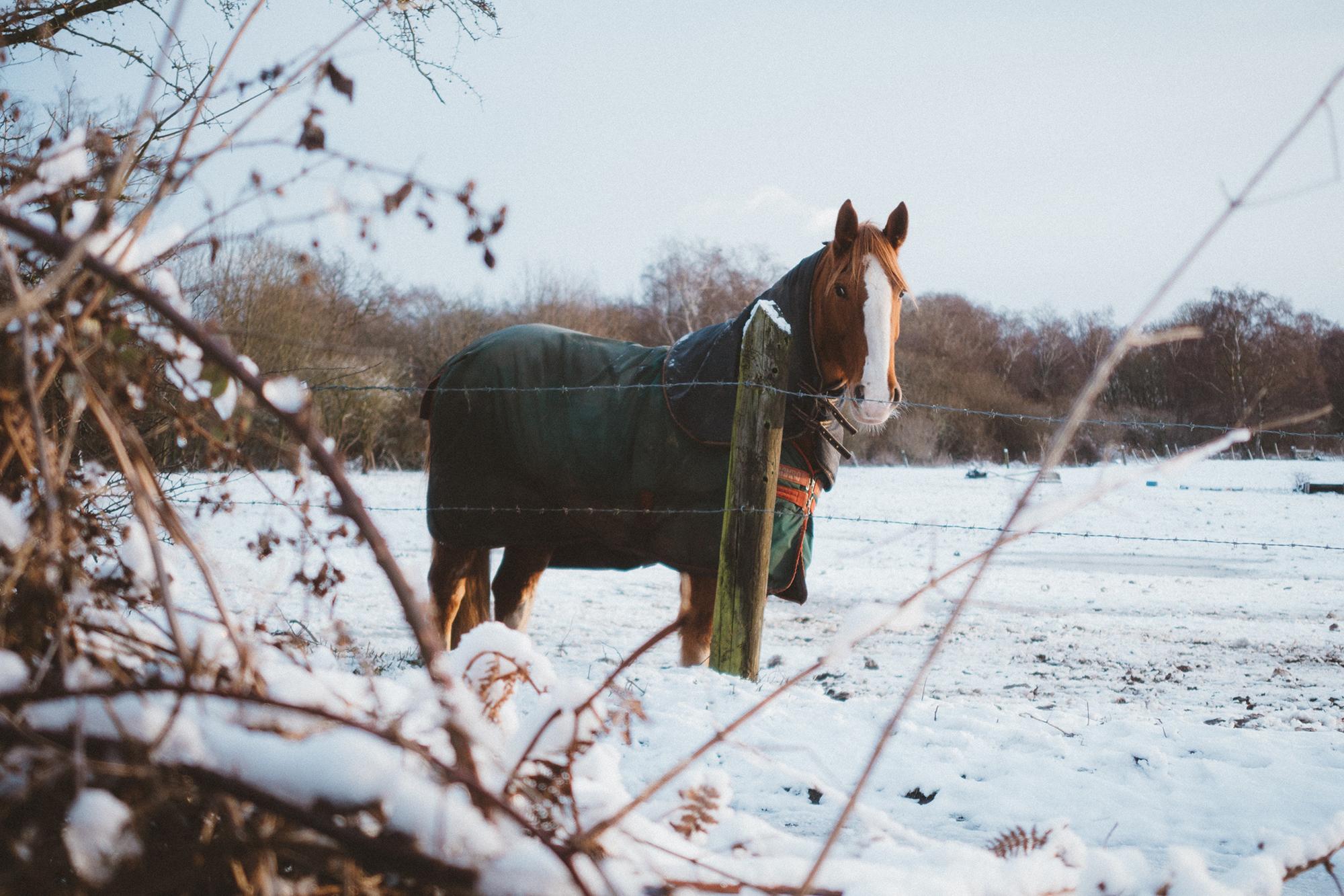 djup_vinter
