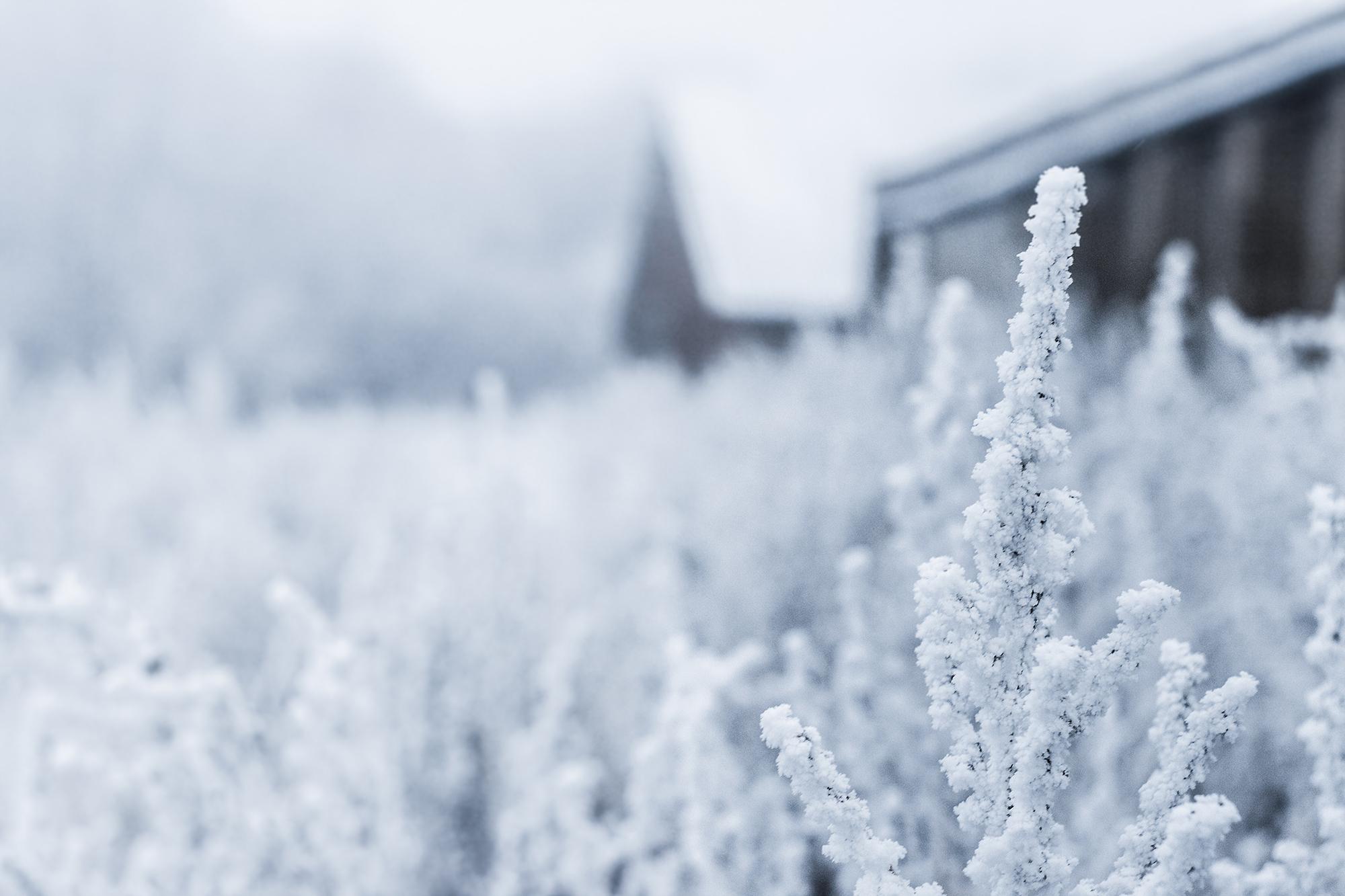 vinter_mobilbild