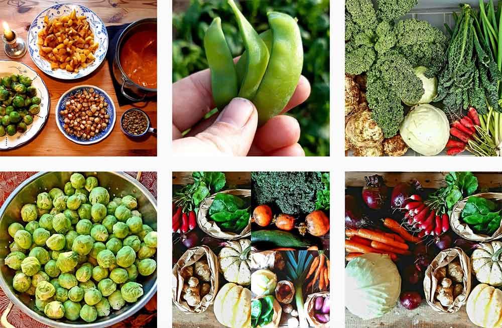 Bildkollage med foton på nyskördade grönsaker